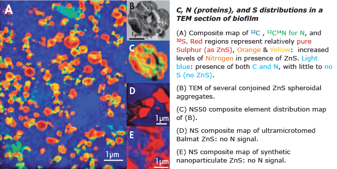 NanoSIMS Application in Bio-Geochemistry: Extracellular proteins limit the dispersal of biogenic nanoparticles
